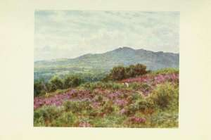 19-hindhead-from-witley-common